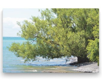 16x24 Gallery Wrap Canvas Photo Tree at Water's Edge - Nature Photography – Serene Image