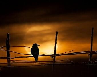 Wooden Fence, Black Gothic Raven, Harvest Moon, Orange Sky, Never More Quoth The Raven, Fine Art, Landscape, Bird, Photograph