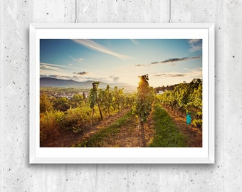 Vineyards at sunset near Obernai, Alsace, France,  Fine Art Photograph