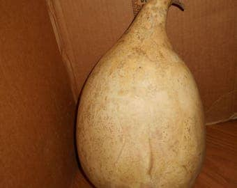 Dried pear shaped gourd.