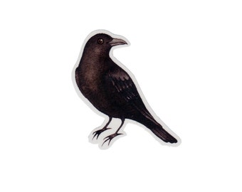 American Crow Bird Magnet / Nature Art / Refrigerator Magnet / Office Magnet / Party Favor / Small Gift