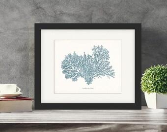 Coastal Décor Vintage Aqua Sea Coral Giclee Print