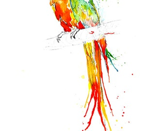 Fine Art Giclee Print: Catalina Macaw Parrot (Watercolour painting)