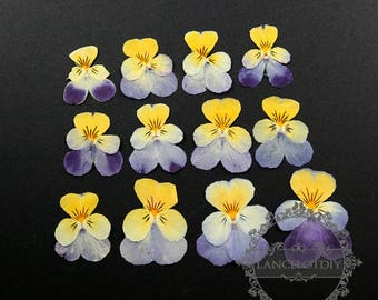 1pack purple yellow pansy DIY dry pressed flower for glass dome resin 12pcs each pack 1503130