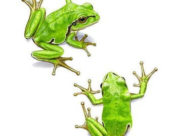 Signed Print - Two European Tree Frogs (HA0306)
