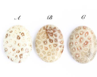 Ammonite Coral Cabochon, White Brown Earth Red Natural Stone (1) Cabochon, 40mm X30mm Your Pick