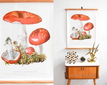 Botanical poster, mushroom print, school chart, pull down chart, roll down poster, educational print
