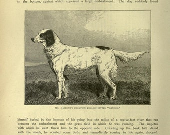 ENGLISH SETTER Dog ANTIQUE Dog illustration print c1881 by Vero Shaw Cassells Company Unique gift Christmas Thanksgiving Birthday present