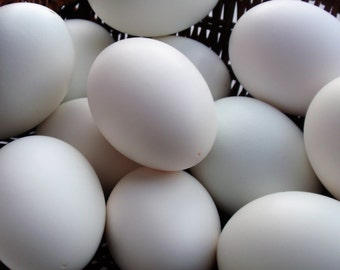 Blown Duck Eggs, Eggs for Pysanky, Eggs for Ornaments, Easter Eggs, Eggs for Crafts