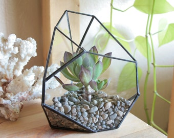 Small Facet Terrarium - a geometric home for succulents, airplants, and tiny cacti