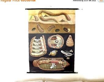 VENTA Vintage Carta científica, lombriz, Jung Koch Quentell, tabla de pared alemán, desplazamiento educativo, cartel de pared zoológica