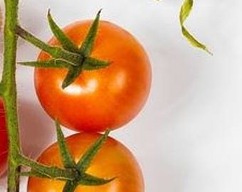 """Bicolor Cherry Tomato """"Isis Candy"""" very sweet! 12+ seeds"""