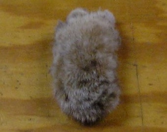 Preserved Front Kansas Bobcat Paw with Claws