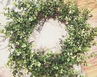Eucalyptus and Beach Wood Bush Grapevine Wreath