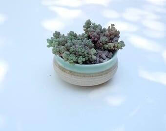 Mini Succulents with pot