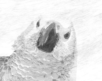 African Grey Parrot  Sketch Digital File
