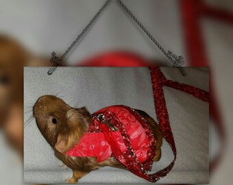 Guinea Pig Dress Harness with Matching Leash