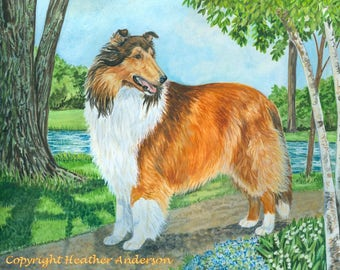 """8x10 giclee print, rough sable collie, """"Classic Collie"""", hand drawn, collie art, dog lover art, Heather Anderson"""
