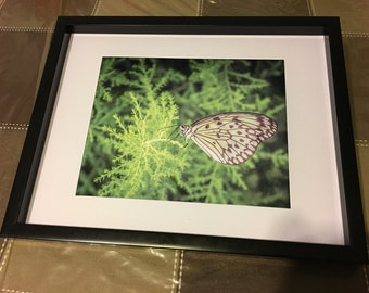 Butterfly Dream Photography Print
