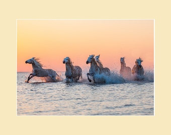 Camargue Horses in the Sea at Sunrise - horses in water in the South of France mounted photographic print ideal for horselovers