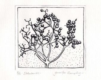 Elderberries - Drypoint Etching by Jennifer Rampling