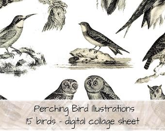 Perching Bird B&W Illustrations digital collage sheet 0122