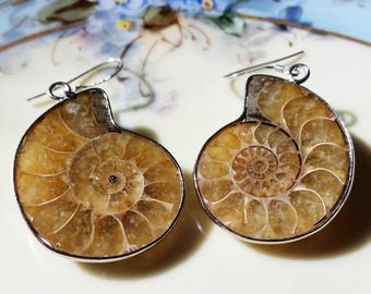 Natural Ammonite Earrings Nautilus Shaped Fossil 925 Sterling Silver