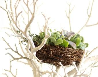 Small Succulent Nest