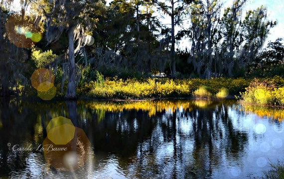 YELLOW MARSH FLOWERS in Bloom~ Louisiana Marshes and Swamps ~ Sunlight Reflections ~ Nature Photography ~ Cajun Decor ~ Creole ~