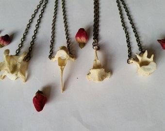 Real fox animal bone jewellery vertebrae spine bronze chain necklaces Taxidermy Oddities