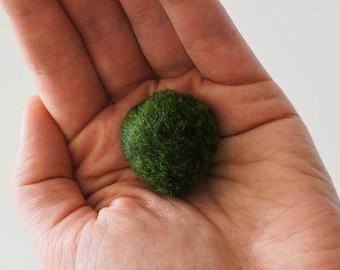 Marimo moss ball, 3 cm