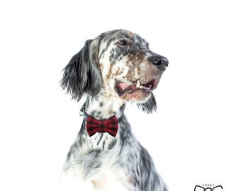 """Burgundy dog bow tie - 30% of sales donated to dog shelters """"dog bow tie"""" symbol for animal support"""