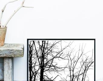 Tree Art Print, Minimalist Poster, Scandinavian Art, Giclee print, Wall Art, Wall Decor, Home Decor
