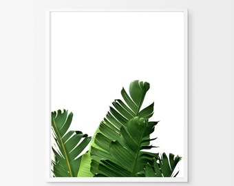 Palm Leaf Print Green Wall art Foliage Tropical Wall art Beach Decor Coastal Minimalist Poster Banana Leaf Boho Botanical Photograph Leaves