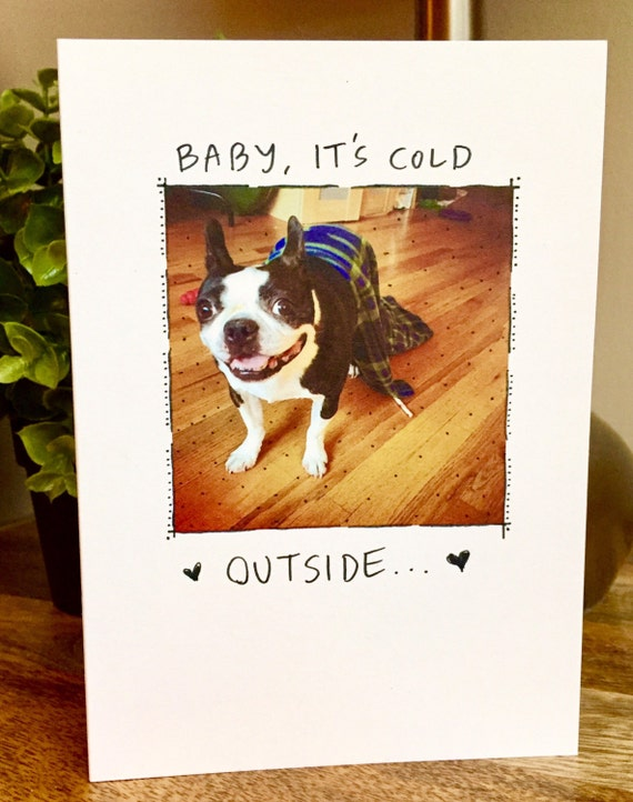 Funny christmas card, boston terrier holiday card, dog christmas card, baby its cold outside, boston terrier christmas card, dog christmas