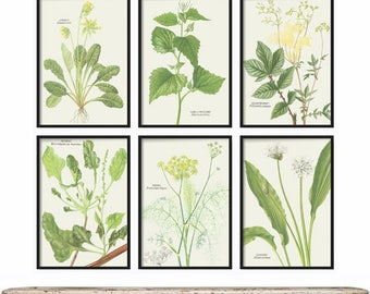 Botanical Print Set of 6 - Herb Prints - Farmhouse Decor - Rustic Decor - Home Decor - Art Prints - Wall Art - Wall Decor - Mothers day gift