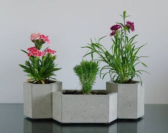 Set of 3: Hexagon concrete planters, Cactus planter, Succulent planter, Flower pot, Concrete pot, Modern planter, Hexagon planter