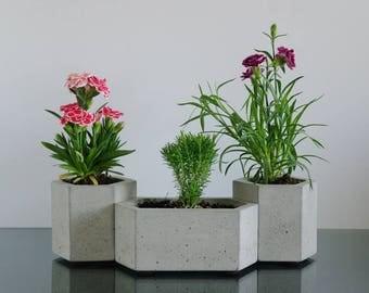Set of 3: Hexagon concrete planters, Cactus planter, Succulent planter, Flower pot, Concrete pot, Modern planter, Hexagon planter