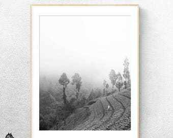 Terrace, steps agriculture Forest mist fog cloud mountains indonesia black and white vertical Photography Landscape decor digital art prints