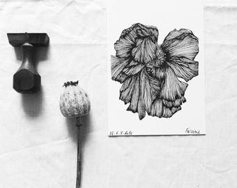 Peony - botanical Flowers - illustrated Postcard - drawing by hand - numbered and limited drawing - monocotylédone