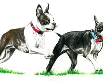 Dog art, Boston Terrier, print