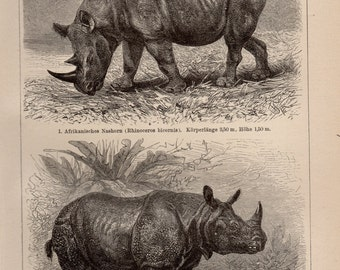 Antique Rhino Lithograph - Antique Mammal Print from 1890