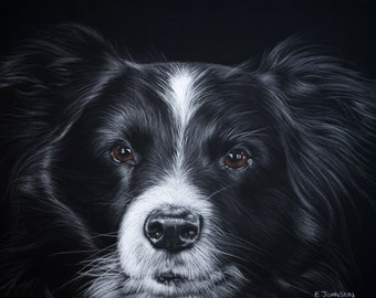 Boarder collie - Sheepdog - Limited Edition A3 Giclée print