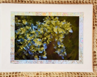 Blue Hydrangea note cards