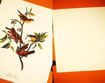 Original Audubon Folio Print - Painted Finch - Fringilla Ciris - 100% Original - 1950s