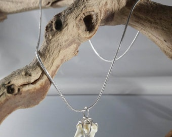 Real Raccoon Teeth Wire-Wrapped Necklace / Authentic Taxidermy Jewelry