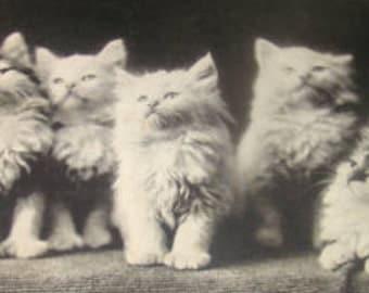 Vintage RPPC of Kittens