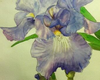 Light Blue Iris