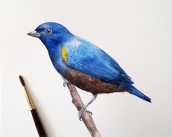 Original Watercolor Painting - Chestnut-belllied Euphonia Bird,  Original Artwork, Watercolor Illustration