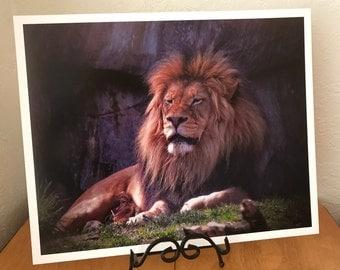 Male Lion, Oregon Zoo